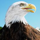 Proud Eagle by George Cathcart