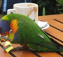 Parrot eating sugar out of a packet by Marilyn Baldey