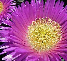 Flower 01 by DarthIndy