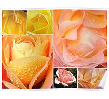 Roses All The Way- Collage Poster