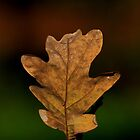 Autumn leaf by dotweb