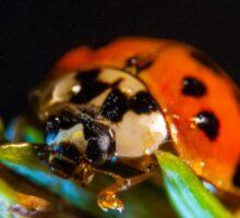 My world macro - Ladybug Sticker
