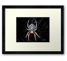 Earth Spider Framed Print