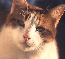 Concentrating Cat by jonbunston