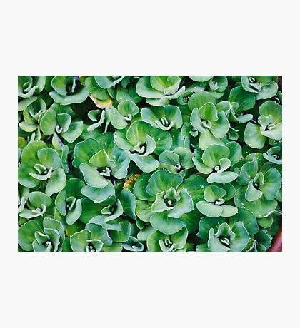 green  Photographic Print