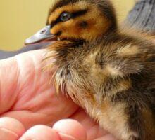 Little Daffy Duck - NZ Sticker