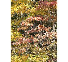 Dogwood & Maple Photographic Print