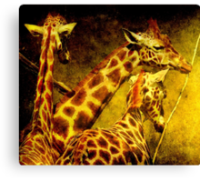 Giraffes galore Canvas Print