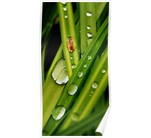 Large Water Droplets Poster