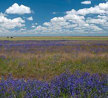 Purple horizon - Jerilderie NSW by Syd Winer