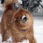 LET IT SNOW by mlynnd