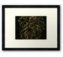 Macro Plant Life Framed Print