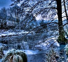 Swanbourne Lake - January 2009 by Greg Roberts