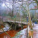 Poohsticks Bridge by Tony Hadfield
