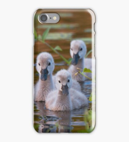 The Baby Swan Trio iPhone Case/Skin