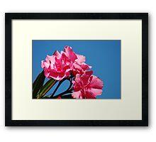 Deadly Pink Framed Print