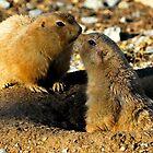 Prairie Dog Kiss by Bill Miller
