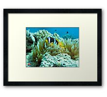 Clownfish Egypt Framed Print