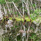 Bemm River Reflections East Gippsland Vic. by helmutk