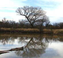 Reflective Notions by Kimberly Miller