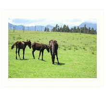 Mare and Colts on a Hill Art Print