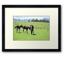 Mare and Colts on a Hill Framed Print
