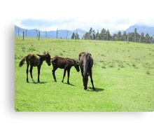 Mare and Colts on a Hill Metal Print