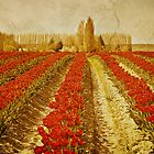 Tulip Field by Colleen Farrell