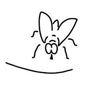 flies room fly by lineamentum