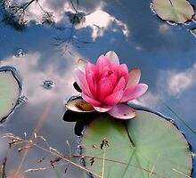 Lily in a reflected sky by ienemien