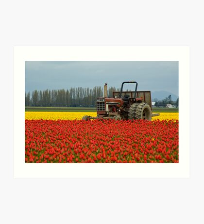 Tractor in Tulip Field Art Print