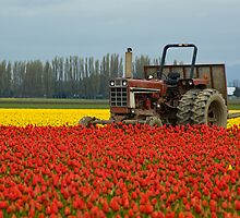 Tractor in Tulip Field by Tony Cataldo