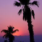 palms by Luca Renoldi