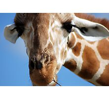 Giraffe in my lens Photographic Print