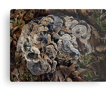 Turkey Tails Metal Print