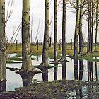 Birkenau - Tree - Reflection  by Carl Gaynor