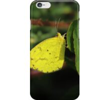 Cabbage Butterfly on a Leaf iPhone Case/Skin