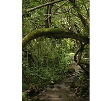 Paths Photographic Print