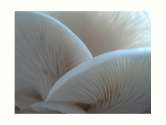 Oyster Mushrooms by May Lattanzio