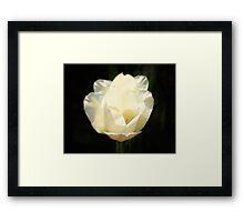 Backlit Tulips Framed Print