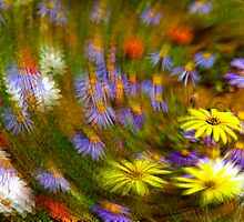 Namaqua Colours by Bennie Vivier