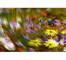 Namaqua Colours Photographic Print