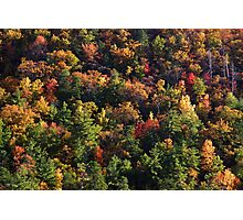 A Slice of Fall Photographic Print