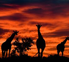 African Sunset by Bennie Vivier