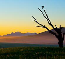 Morning Light by Bennie Vivier