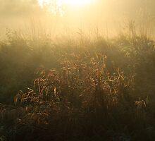Crown Meadow Mist by IanJTurner