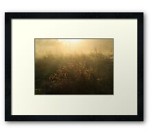 Crown Meadow Mist Framed Print