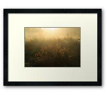 Crown Meadow Mist Framed Print