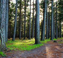 Forest by Bennie Vivier