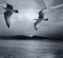 Seagulls flying in storm by franceslewis